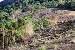 Kiến nghị xử lý trách nhiệm trong quản lý, bảo vệ rừngở Gia Lai