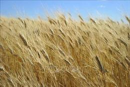 Điểm lại thị trường nông sản thế giới tuần qua
