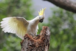 Giải cứu hơn 200 con chim quý hiếm bị buôn bán trái phép
