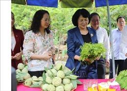 Đề nghị huyện Chi Lăng có chương trình cụ thể chăm lo cho đồng bào dân tộc thiểu số