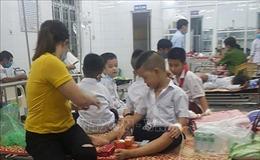 26 học sinh tiểu học ở Quảng Trị bị ong đốt phải nhập viện