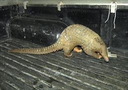 Bắt quả tang đối tượng tàng trữ, buôn bán 80 cá thể động vật hoang dã