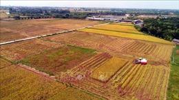 Xây dựng mô hình sản xuất nông nghiệp hàng hóa quy mô lớn