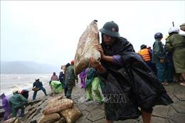 Khẩn trương khắc phục sạt lở đê, kè tại các điểm xung yếu ở Hà Tĩnh