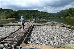 Nguyên nhân 80 tấn cá lồng chết bất thường trên hồ Hồng Khếnh, Điện Biên