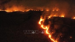 Các vụ cháy rừng Amazon tăng mạnh trong tháng 10