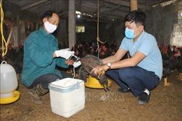 Ninh Bình ngăn ngừa dịch cúm gia cầm có nguy cơ bùng phát