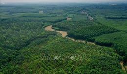 Giai đoạn 2015-2019, diện tích rừng khu vực miền Trung tăng gần 374.000 ha