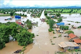 Campuchia cấp hơn 5.000 tấn thóc giống cho nông dân các tỉnh bị lũ lụt