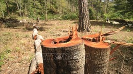 Liên tiếp xảy ra 13 vụ vi phạmtrong lĩnh vực lâm nghiệp ở Lâm Đồng