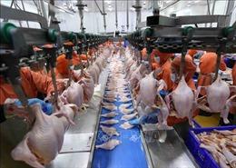 Cơ hội nào cho ngành chăn nuôi trong EVFTA?