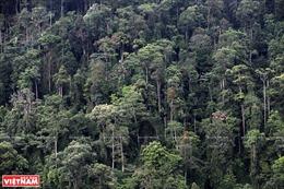 Loại bỏ hàng loạt dự án xin chuyển đổi mục đích sử dụng rừng