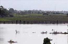 Ninh Thuận huy động nguồn lực tập trung khắc phục mưa lũ