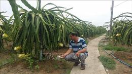 Long An phát triển nông nghiệp ứng dụng công nghệ cao