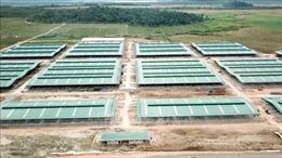 Doanh nghiệp xây chuồng trại khi chưa được cấp phép