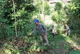 Chi trả dịch vụ môi trường gắn với bảo vệ và phát triển rừng