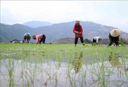 Gần 76% diện tích đã có nước gieo cấy vụ Đông Xuân