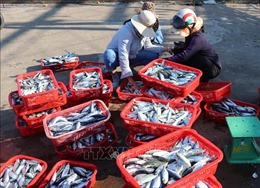 Quảng Ninh: Ưu tiên sử dụng hàng hóa sản xuất trong tỉnh