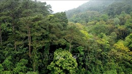 Mưa trên diện rộng khắc phục tình trạng khô hạn và cháy rừng ở Vĩnh Phúc