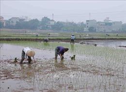 Gần 98% diện tích đã có nước cho gieo cấy vụ Đông Xuân
