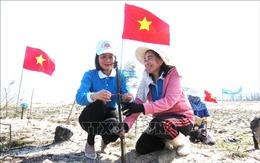 Trồng hơn 1.000 cây phi lao chắn cát dọc bờ biển Quảng Bình