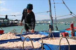 Ngư dân Phú Yên trúng đậm trong chuyến biển đầu năm