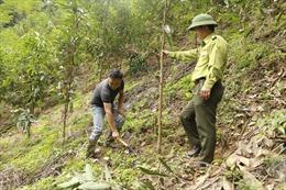 Phát triển kinh tế đồi rừng trên vùng đất ATK Định Hóa
