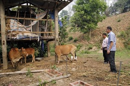 Người dân vùng biên thoát nghèo nhờ nguồn vốn ưu đãi