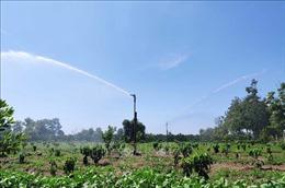 Chủ động nguồn nước tưới, ứng phó với cao điểm mùa khô