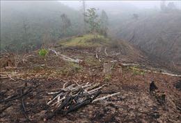 Phản hồi thông tin TTXVN: Điện Biên chỉ đạo làm rõ về vụ phá rừng ở Nậm Pồ