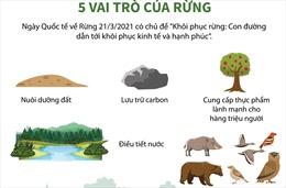 Ngày Quốc tế về Rừng 21/3/2021: 5 vai trò của rừng