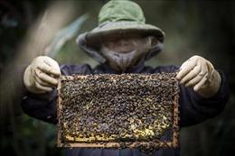 Triển vọng nghề nuôi ong lấy mật ở xã Độc Lập