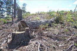 Lâm Đồng: Đề xuất xử lý trách nhiệm người đứng đầu 4 đơn vị để mất rừng
