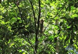 Thả 4 cá thể động vật hoang dã quý hiếm về rừng