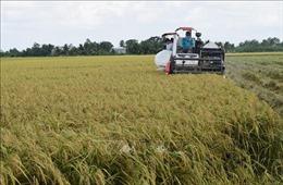 Giải quyết điểm nghẽn cho nông sản vào vụ - Bài cuối: Khơi thông chuỗi hàng hóa nông sản
