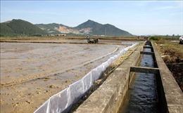 Chủ động đảm bảo nguồn nước tưới vụ lúa Hè Thu 2021