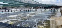 Giá trị sản xuất ngành tôm biển Bến Tre đạt 1 tỷ USD vào năm 2025