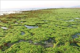 Bảo tồn, phát triển bền vững đa dạng sinh học biển