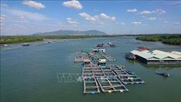 Bà Rịa-Vũng Tàu phát huy thế mạnh nuôi trồng thủy sản