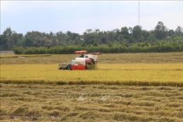 Tiền Giang liên kết tiêu thụ lúa Hè Thu 2021
