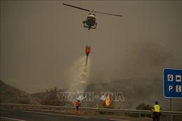 Tây Ban Nha điều động quân đội hỗ trợ dập tắt cháy rừng ở tỉnh Malaga