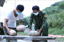 Đồn Biên phòng Pò Mã tăng gia sản xuất trên tuyến đầu chống dịch