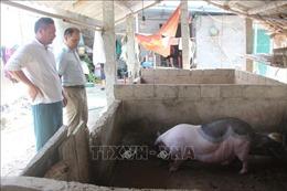 Giá lợn hơi giảm mạnh nhưng giá thịt vẫn cao