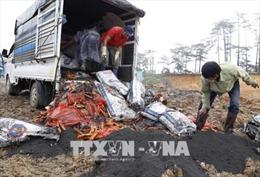Lâm Đồng tiêu huỷ hơn 4 tấn hàng hóa nhập lậu