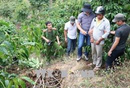 Hoãn xét xử vụ giết chủ nợ, cướp tài sản, giấu xác phi tang ở Lâm Đồng