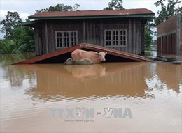 Ủy hội Sông Mê Công sẵn sàng hỗ trợ Lào rà soát, cập nhật kế hoạch phát triển thủy điện
