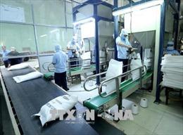 Quy định về điều kiện kinh doanh xuất khẩu gạo