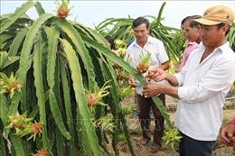 Trái cây sạch cho thị trường nội địa - Bài 2: Nền tảng thúc đẩy xuất khẩu
