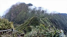 Làm rõ trách nhiệm tập thể, cá nhân để xảy ra phá rừng tại Vườn Quốc gia Hoàng Liên