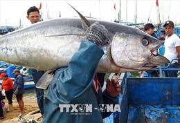 Tìm phương án giải cứu 50 container cá ngừ bị ách tại cảng